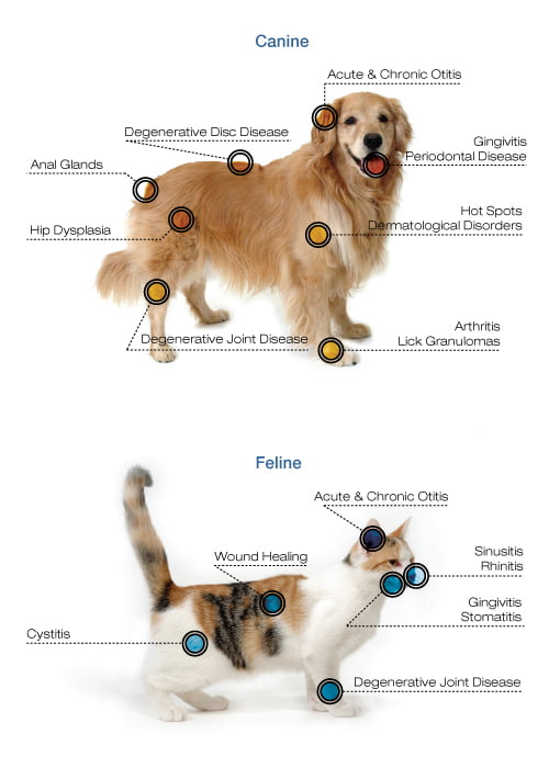 a chart showing the different places that laser therapy can be used on a dog or cat with what benefits